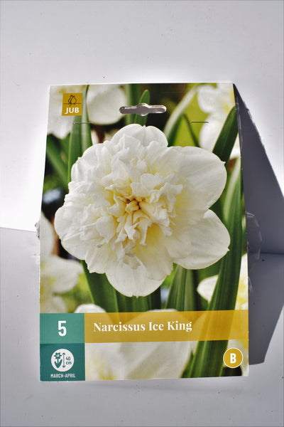 Narcissus Ice King bulbs