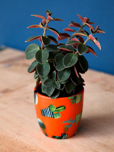 orange cacti print house plant pot planter