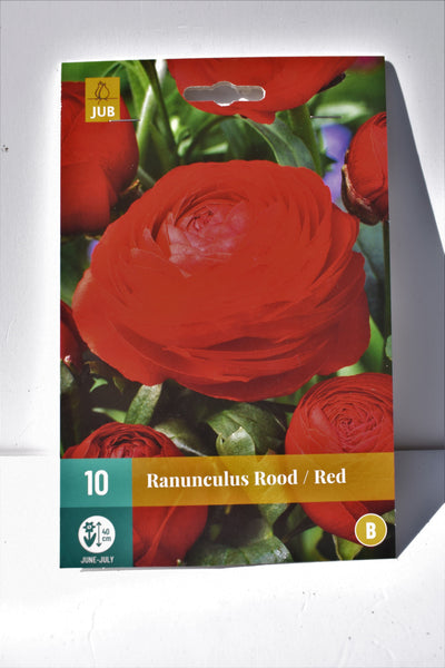 Ranunculus Red Bulbs