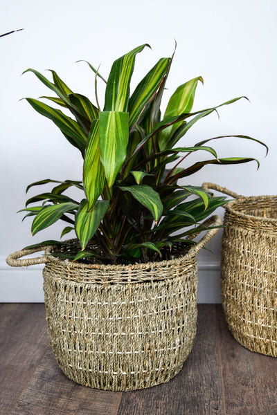 Seagrass natural basket planter
