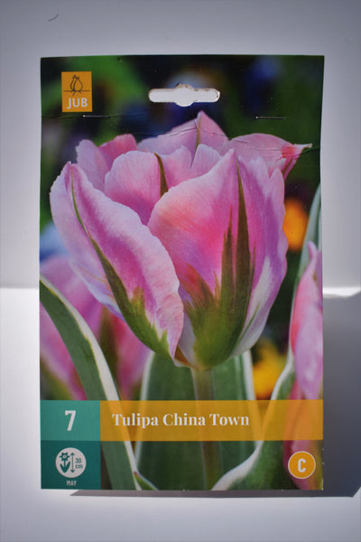 Tulip China Town Bulbs