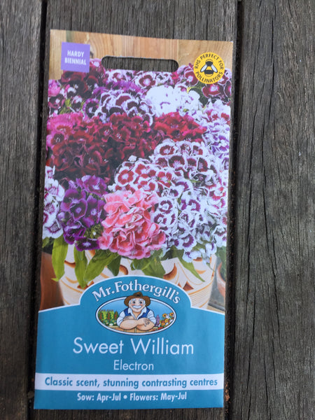 Sweet William Electron Seeds by Mr Fothergill's