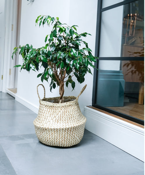 Seagrass Chevron Design Plant Basket
