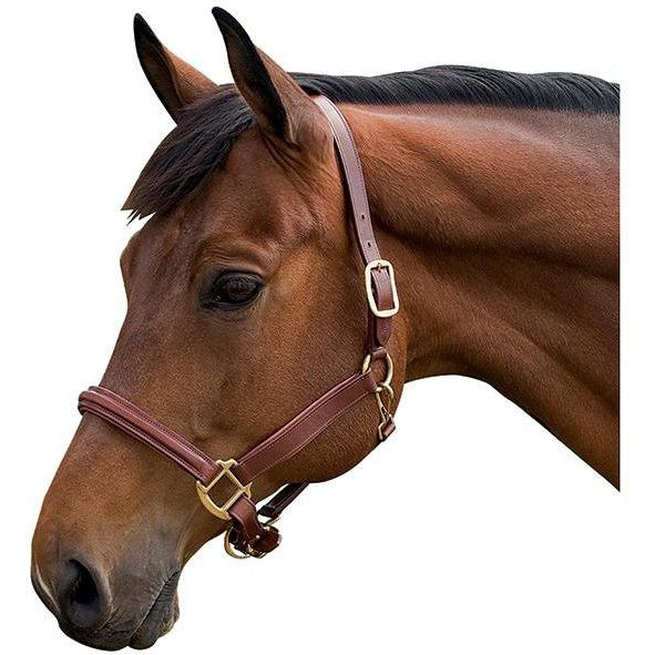 Flex Rider Cognac Raised Leather Halter - West 20 Saddle Co.