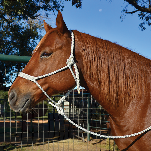 Classic Equine Mule Tape Halter - West 20 Saddle Co.