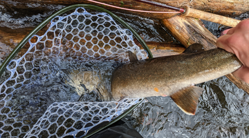 Metolius River Report 3/25/21