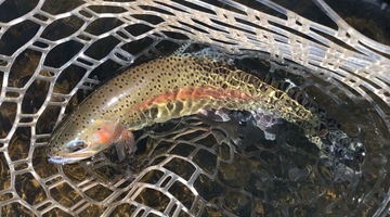 Crooked River Report 4/2/21