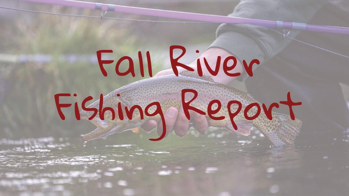 Fall River Update – Fly and Field Outfitters - Online Flyfishing Shop