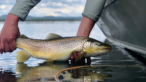 wickiup brown fly fishing