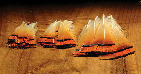 Hareline Dubbin Golden Pheasant Tippets - Fly and Field Outfitters - Online Flyfishing Shop