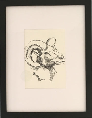 """Big Horn"" - Pen & Ink 