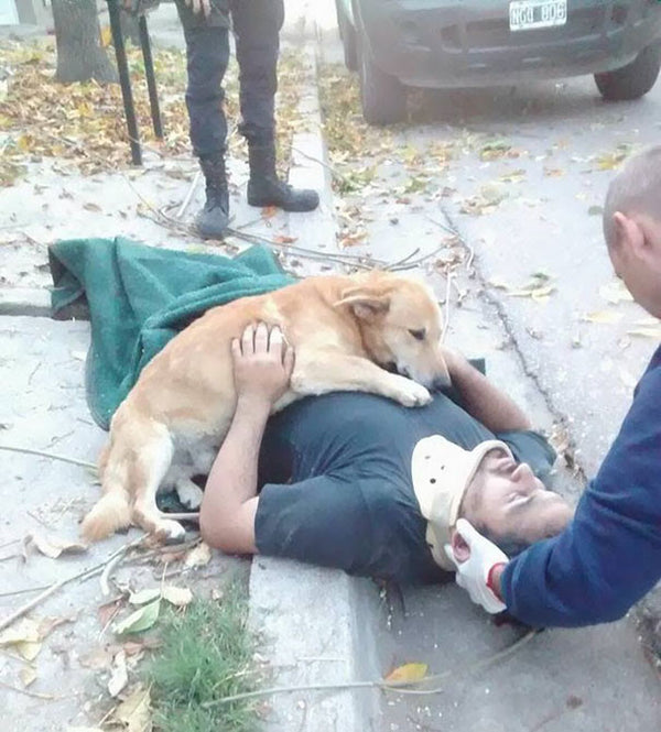 SO SWEET!! This worried dog wouldn't stop hugging his owner.