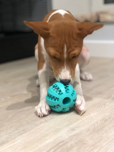 Puppy Einstein IQ Treat Ball