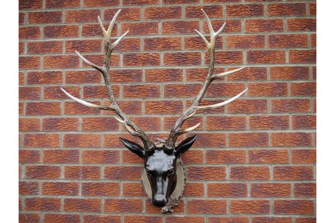Large Wall Mounted Stag Head Wall Art H100cm x W78cm x D35cm | furniturechecklist.co.uk