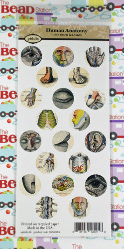 Human Anatomy 1 Inch Circle Images ~ Piddix