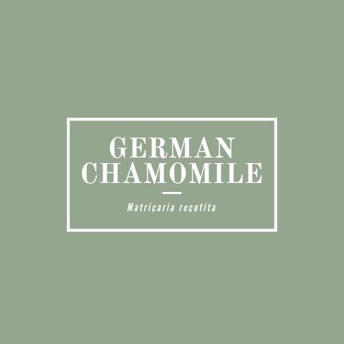 German Chamomile - rå goods
