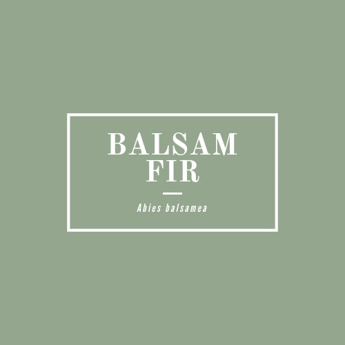 Balsam Fir - rå goods