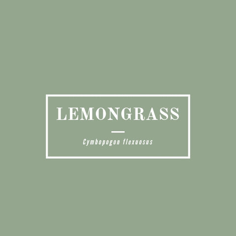 Lemongrass - rå goods