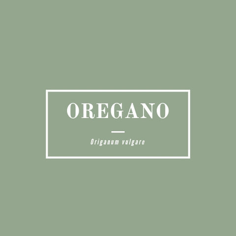 Oregano - rå goods
