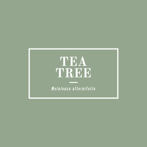 Tea Tree - rå goods