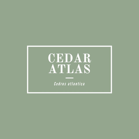 Cedar, Atlas - rå goods