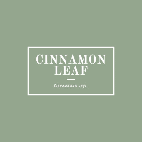 Cinnamon Leaf - rå goods