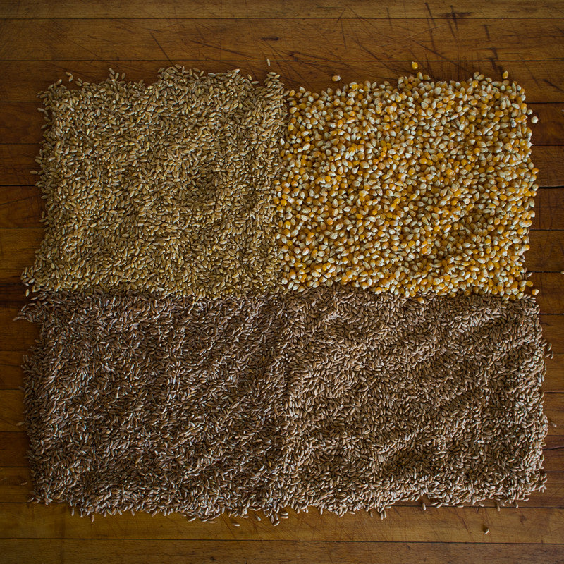 Estate Grown California Ancient Grains Delivered From Historic Rancho Llano Seco | Heirloom Popcorn | Wheat Berries | Farro | Spelt