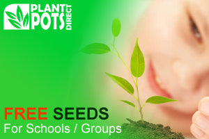 Free Seeds for Schools & Groups