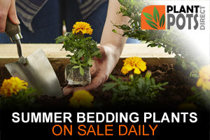 Summer 2019 Bedding plant sales