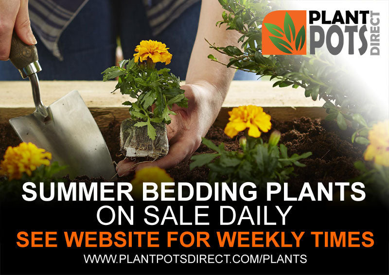 Summer bedding plants 2020