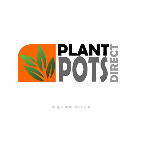 Sweet Corn Mini Pop F1 Seeds when to sow