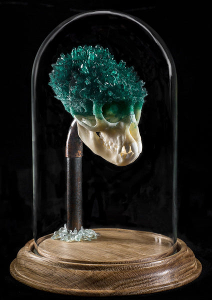 "Gerard Geer - ""Venus' Jade"" - crystallised Vervet monkey skull in glass dome"