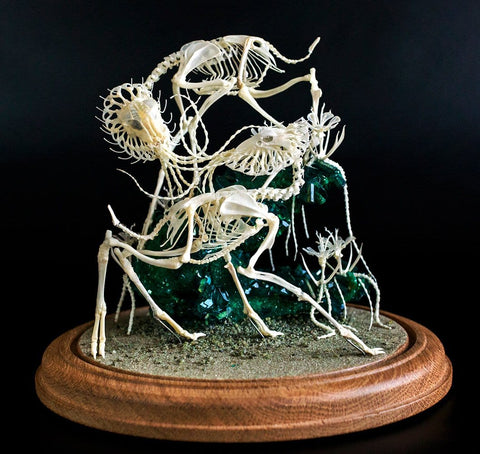 "Gerard Geer - ""Entangled Union"" - assorted animal bones and mixed media - 21.5 x 33cm (8.4""x13"")"