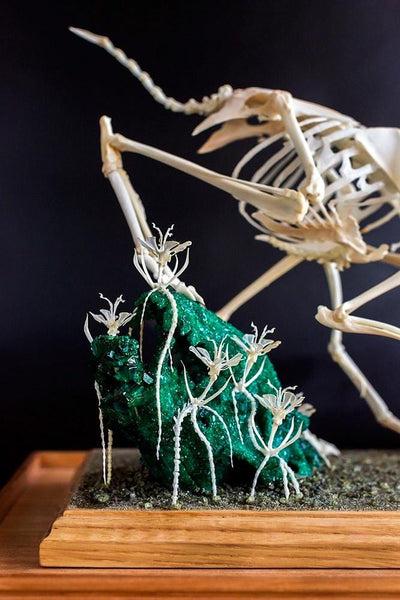 "Gerard Geer - ""Procession I - Leaving the Mangroves"" - assorted animal bones and mixed media - 34 x 25.5 x 38cm (13.3""x10""x15"")"