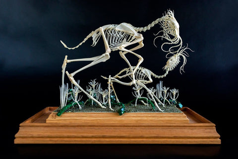 "Gerard Geer - ""Procession II - First Steps in the Shallows"" - assorted animal bones and mixed media - 34 x 25.5 x 38cm (13.3""x10""x15"")"