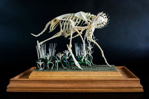 "Gerard Geer - ""Procession III - Looking Back at the New"" - assorted animal bones and mixed media - 34 x 25.5 x 38cm (13.3""x10""x15"")"