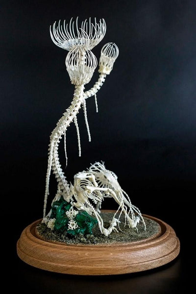 "Gerard Geer - ""Resting Under Polyp Trees"" - assorted animal bones and mixed media - 17 x 28cm (6.6""x11"")"