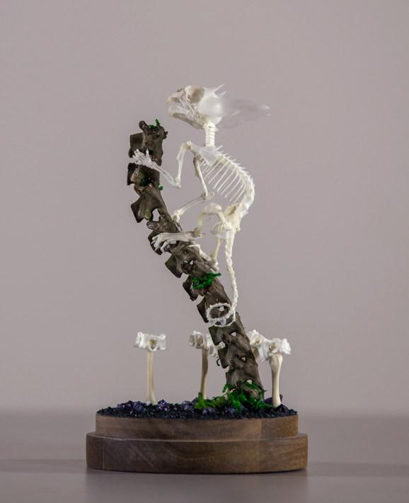 "Gerard Geer - ""Vantage Point"" - assorted rat, fish, bird, snake, mouse and cane toad bones, wire and crystal on acacia base under glass dome - 10 x 20cm (3.9""x7.9"")"