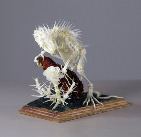 "Gerard Geer - ""Chasing Scents"" - assorted animal bones, crystallised fox skull on Oak base, in display case - Piece: 25 x 15 x 31cm (9.8""x5.9""x12.2"") - Display case: 40.5 x 30.5 x 49.5cm ( 15.9""x12""x19.5"")"