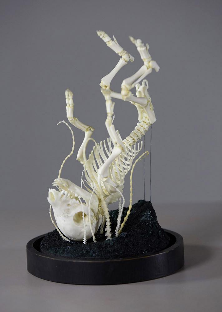 "Gerard Geer - ""Fall to Dream"" - articulated deformed piglet skeleton, mouse and rat bones, crystals and wire on wooden base under glass dome - 20 x 30cm (7.9""x11.8"")"