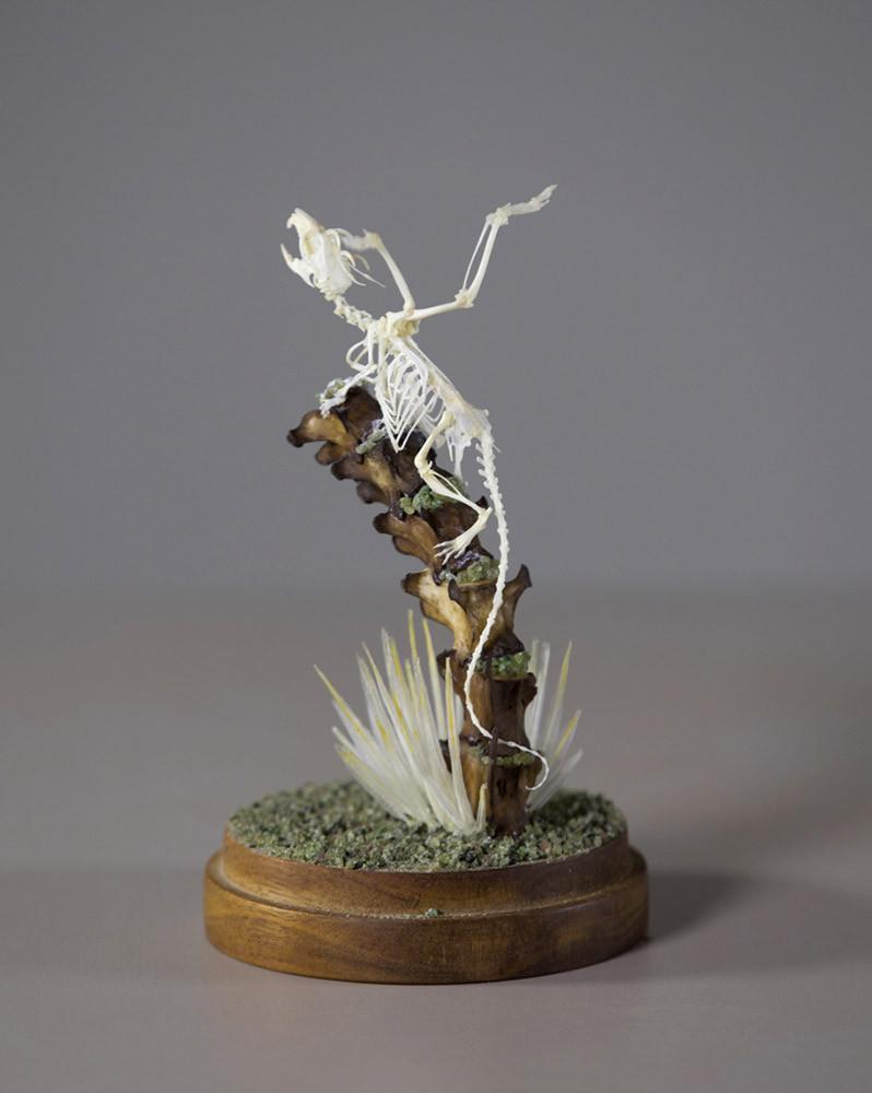 "Gerard Geer - ""Take Flight"" - assorted bird, mouse, fish and fox bones, garnet crystal, on acacia base under glass dome - 10 x 20cm (3.9""x7.9"")"