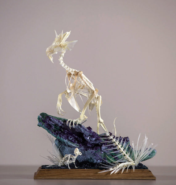 "Gerard Geer - ""The Hunt"" - assorted animal bones, crystallised sheep skull on oak base, in display case - Piece: 25 x 15 x 31cm (9.8""x5.9""x12.2"") - Display case: 40.5 x 30.5 x 49.5cm ( 15.9""x12""x19.5"")"