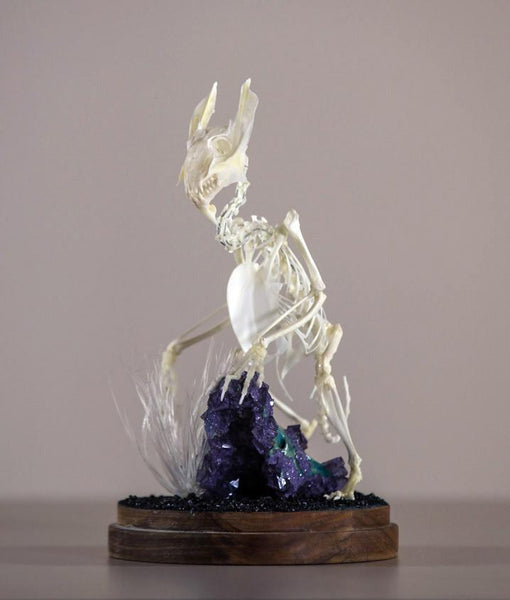 "Gerard Geer - ""Pause"" - assorted bird, fish, rabbit and guinea pig bones, crystallised fox skull and crystals on acacia base under glass dome - 14 x 27cm (5.5""x10.6"")"