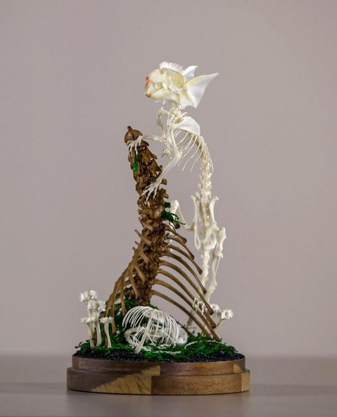 "Gerard Geer - ""Safeguard"" - assorted rat, mouse, bird fish, snake, cane toad, and cat bones, artificially grown crystals and moss on acacia base under glass dome - 14 x 27cm (5.5""x10.6"")"