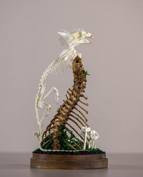 "Gerard Geer - ""Safeguard"" - assorted rat, mouse, bird, fish, snake, cane toad, and cat bones, artificially grown crystals and moss on acacia base under glass dome - 14 x 27cm (5.5""x10.6"")"