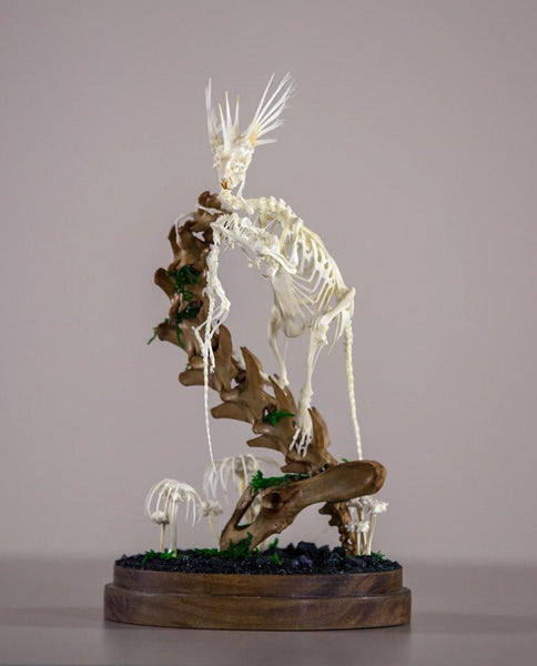 "Gerard Geer - ""A Feasting"" - assorted rat, mouse, bird, fish, snake, cane toad, and cat bones, artificially grown crystals and moss on acacia base under glass dome. 14 x 27cm (5.5""x10.6"")"