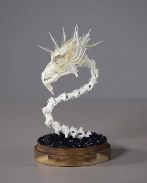 "Gerard Geer - ""Dragon Skull 1"" - assorted fish and bird bones on acacia base under glass dome - 10 x 20cm (3.9""x7.9"")"