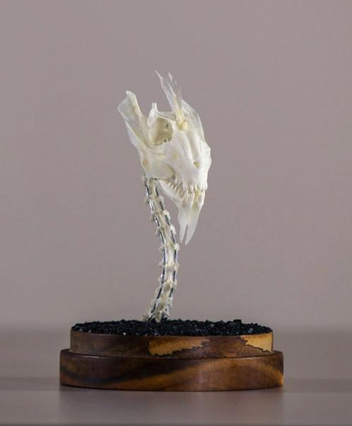 "Gerard Geer - ""Dragon Skull 4"" - assorted fish and bird bones on acacia base under glass dome - 10 x 20cm (3.9""x7.9"")"