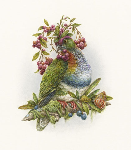 "Courtney Brims - 'Superb Fruit Dove' - coloured pencils on Arches watercolour paper - 18 x 22cm (7""x8.6"")"