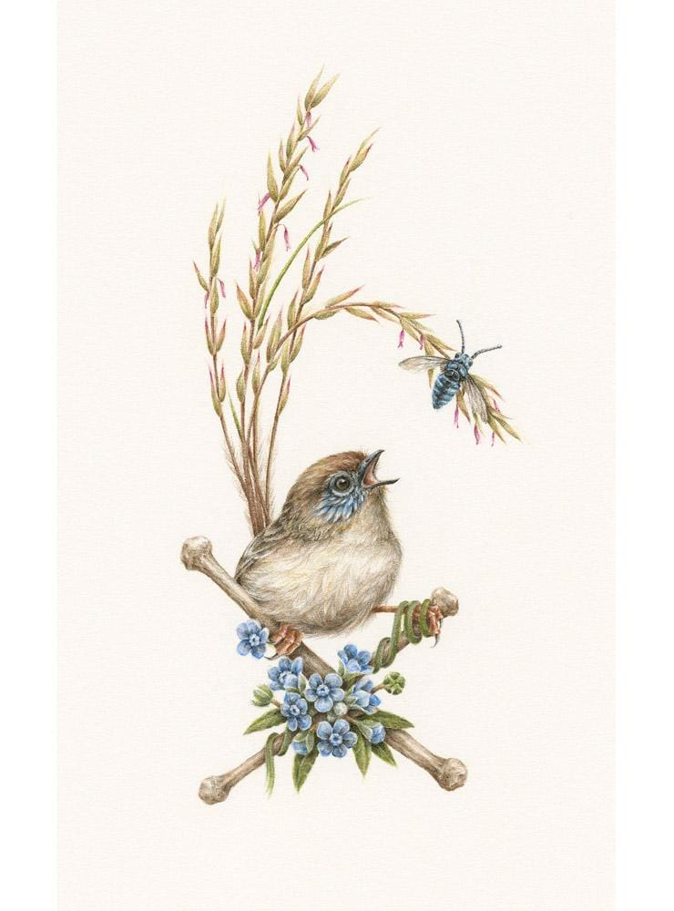 "Courtney Brims - 'Mallee Emu Wren (female)' - coloured pencils on Arches watercolour paper - 12.5 x 20.5cm (5""x8"")"